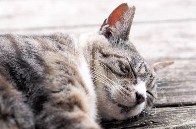 最近眠れない・・・そんな不眠や寝起きの悪さを簡単に解消する方法をご紹介します