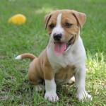 愛犬のために無添加の安全なドッグフードを選ぼう!評判のおすすめドッグフードの口コミを紹介